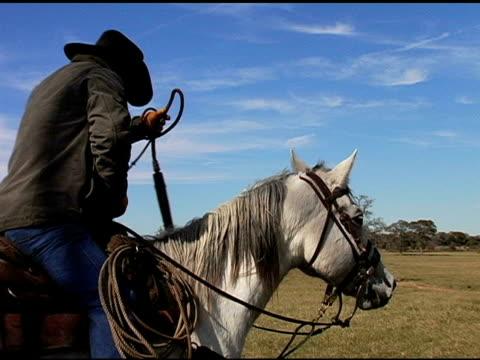 Texas Cowboy Adjusts Whip on White Horse