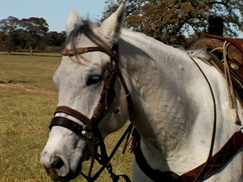 texas cowboy dismounts white horse - bridle stock videos & royalty-free footage