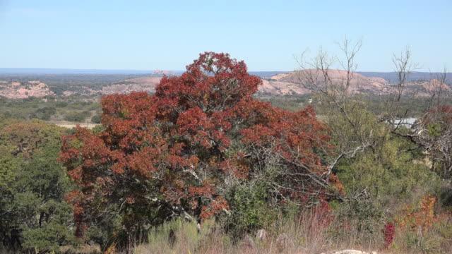 texas enchanted rock past dead tree - granite rock stock videos & royalty-free footage