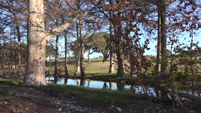 texas hill country stream with oak tree on bank - oak stock videos and b-roll footage