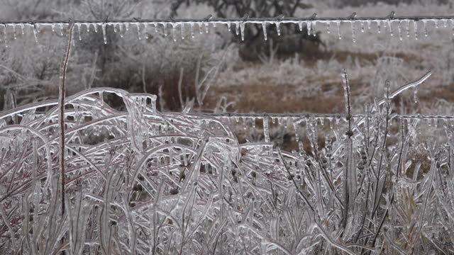 texas icicles on fence and plants - texas stock videos & royalty-free footage