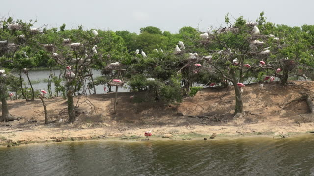 texas island wading birds walking nesting and flying - egret stock videos & royalty-free footage