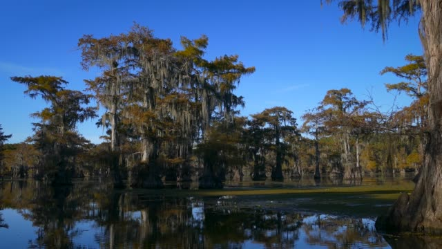 texas louisiana bayou boating - spanish moss stock videos & royalty-free footage