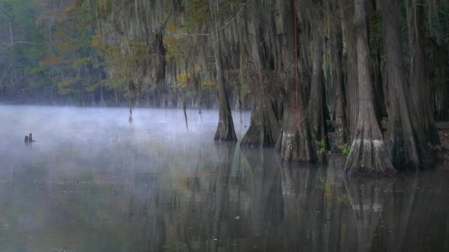 texas louisiana bayou fog - spanish moss stock videos & royalty-free footage