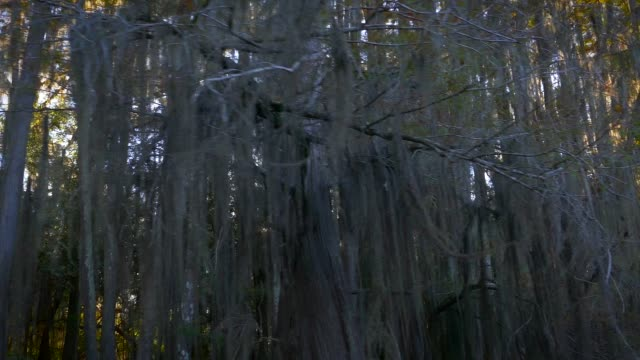texas louisiana bayou sun rays - spanish moss stock videos & royalty-free footage