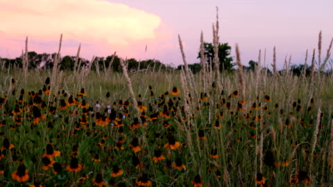 texas springtime sunset - hill stock videos & royalty-free footage