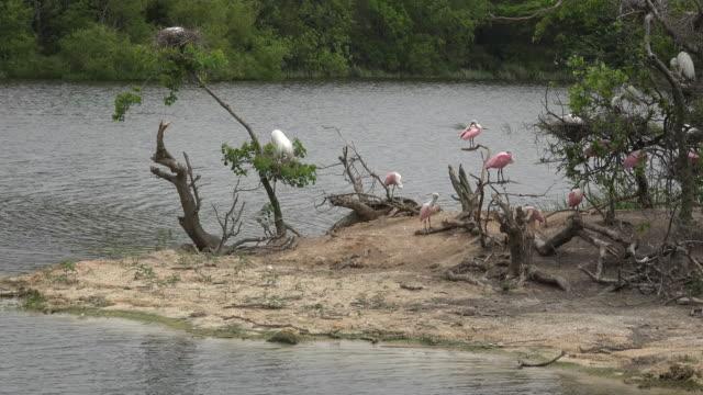 texas waterbird rookery on island - baumstumpf stock-videos und b-roll-filmmaterial