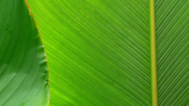 texture of green leaves nature - leaf vein stock videos and b-roll footage