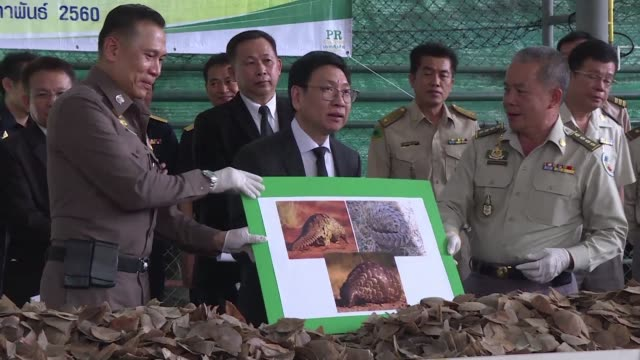 thai authorities display almost 3 tonnes of recently confiscated pangolin scales - pangolino video stock e b–roll