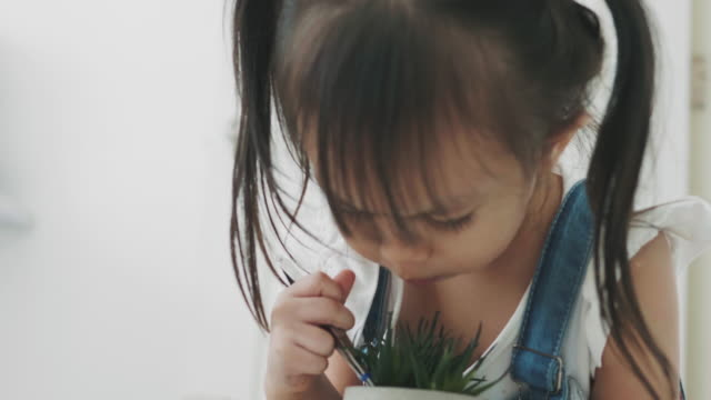 thai baby girl is digging and planting cactus for leisure activity - cute cactus stock videos & royalty-free footage