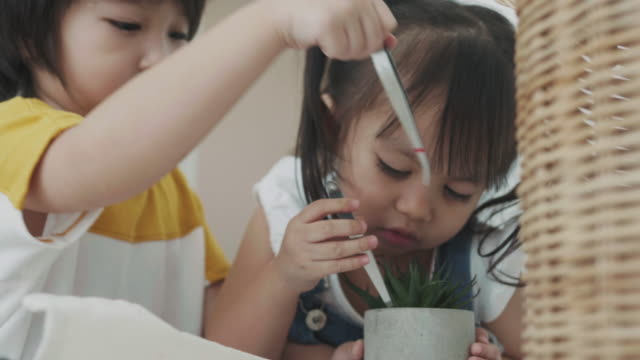 thai children are digging and planting cactus at home - cute cactus stock videos & royalty-free footage