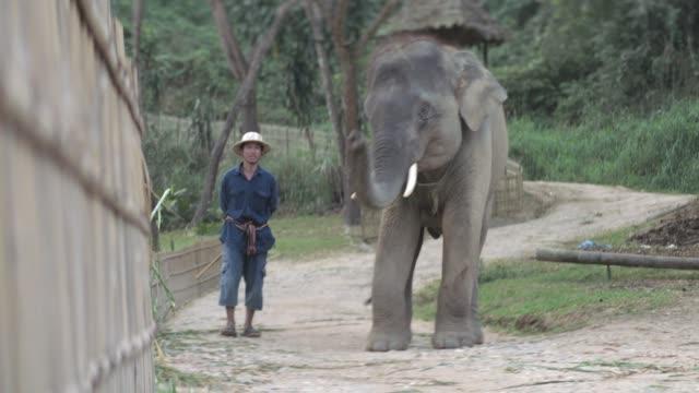 Thai Elephant in Thailand Elephant Kingdom