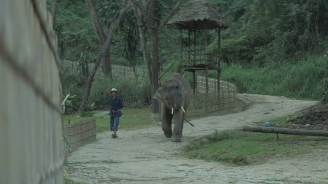 thai elephant in thailand elephant kingdom - anamorphic stock videos & royalty-free footage