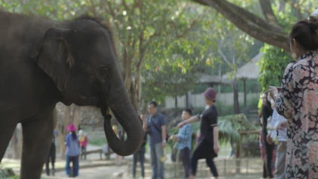 Thai Elephant receiving bananas from Tourists