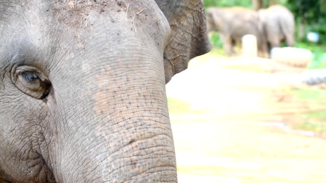 thai elephant - audio available stock videos & royalty-free footage