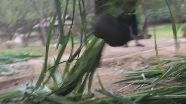 Thai Elephants eating in Thailand Elephant Kingdom