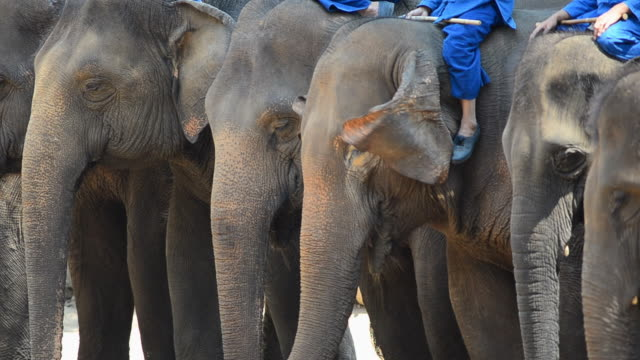 thai elephants - circus stock videos & royalty-free footage
