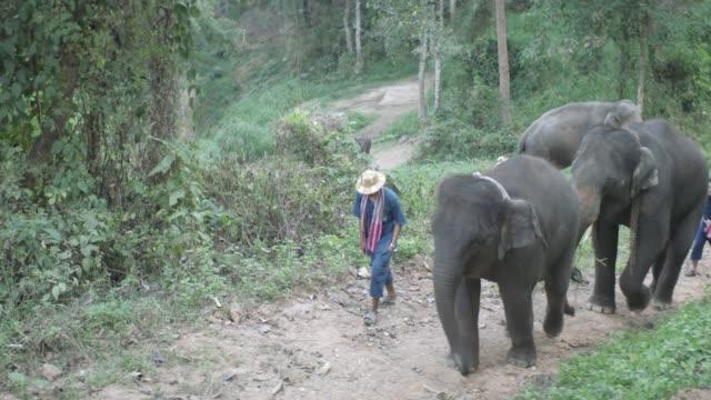 thai elephants walking in jungle - anamorphic stock videos & royalty-free footage