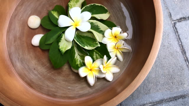 thai frangipani floating in the water bowl make good aroma , hua hin, thailand. - massage oil videos stock videos and b-roll footage