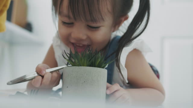 thai girl is planting cactus with positive emotion - cute cactus stock videos & royalty-free footage