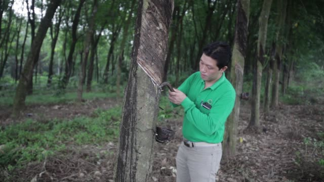 thai hua rubber pcl employee demonstrates rubber tapping from a tree at a plantation adjacent to the company's factory in samnuktong rayong province... - rubber tree stock videos & royalty-free footage