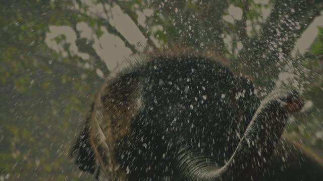 thai new year : happy elephant - elephant stock videos & royalty-free footage