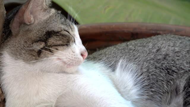 thai sleepy cat under the tree - under her feet stock videos & royalty-free footage