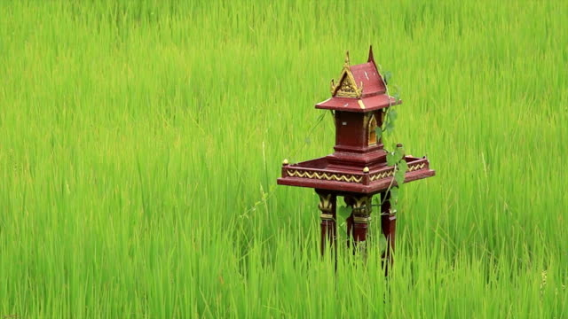 thai spirit house in rice paddy - religious equipment stock videos & royalty-free footage