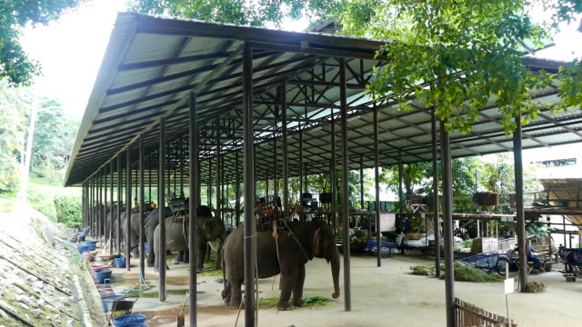 Thailand Elephant Conservation Center