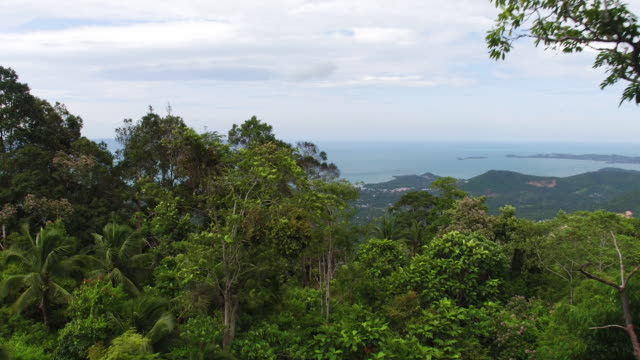 thailand flyover forest - thailand stock videos & royalty-free footage