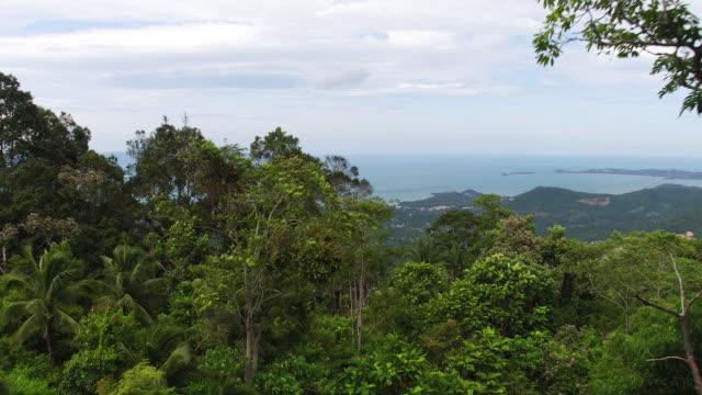 vídeos y material grabado en eventos de stock de thailand flyover forest - thailand