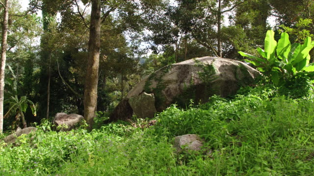 thailand forest and boulders - insel ko samui stock-videos und b-roll-filmmaterial