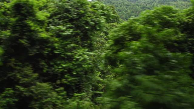 vídeos de stock e filmes b-roll de thailand forest by air - thailand