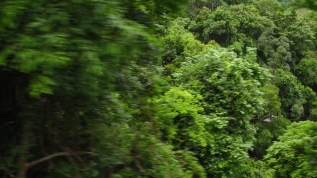 thailand forest by air - ko samui stock videos and b-roll footage