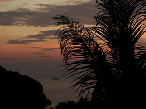 CU, Thailand, Ko Phi Phi, Palm tree silhouetted against moody sky at dusk