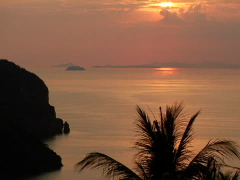 MS, Thailand, Ko Phi Phi, Palm tree silhouetted against ocean at sunset