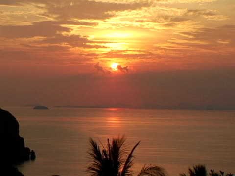 ZO, WS, Thailand, Ko Phi Phi, Palm tree silhouetted against ocean at sunset