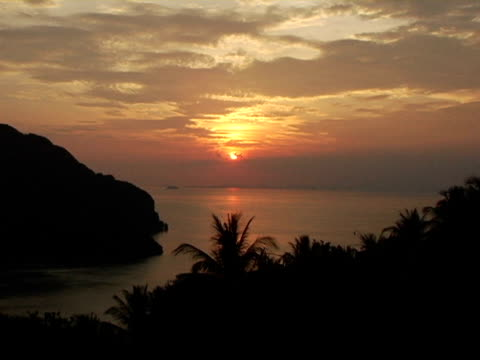 WS, Thailand, Ko Phi Phi, Palm tree silhouetted against ocean at sunset