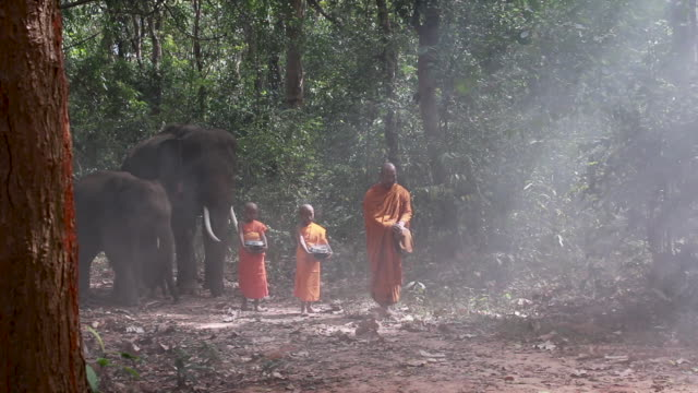 thailand the buddhist monk and novice monk walking alms with elephants in forest of countryside surin province - 僧点の映像素材/bロール