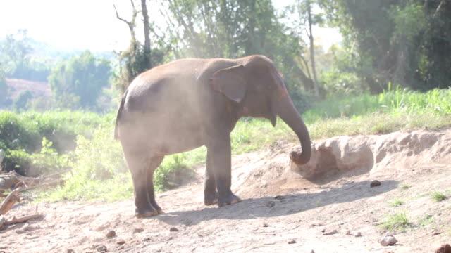 Thailand-Urlaub. Baby spielen Asian Elephant