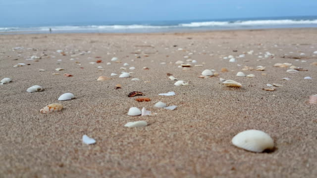 thailand's beach - seashell stock videos and b-roll footage