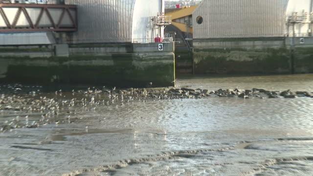 (HD1080i) Themse Barrier Überschwemmung Klimaanlage, ziehen von Seevögeln