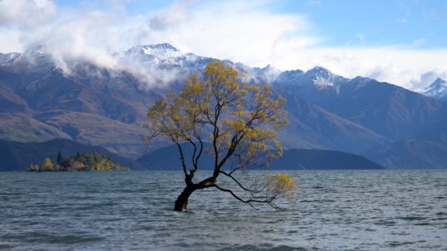 that wanaka tree lonely tree of lake wanaka south island new zealand. - otago region stock videos & royalty-free footage