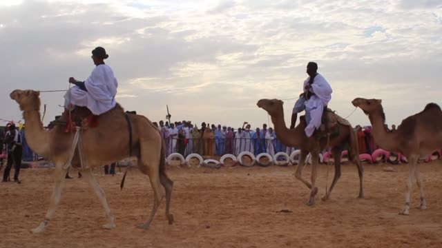 the 10th edition of the mauritanian nomadic festival kicks off in nouakchott with a horse race camel parade and a concert featuring canadian and... - nouakchott stock videos & royalty-free footage