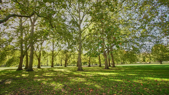 the 13 plane trees in a circle in green park london - grove stock videos & royalty-free footage