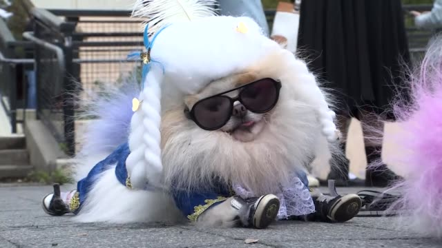 vidéos et rushes de the 28th annual halloween dog parade is held in new york city on october 28, 2018. - se déguiser