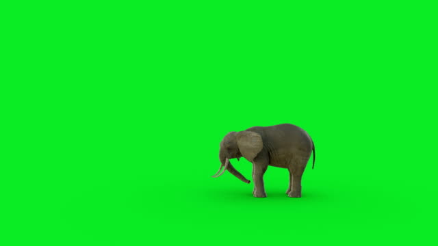vídeos de stock e filmes b-roll de the 3d elephant animation on green screen background and hyper realistic render - chroma key