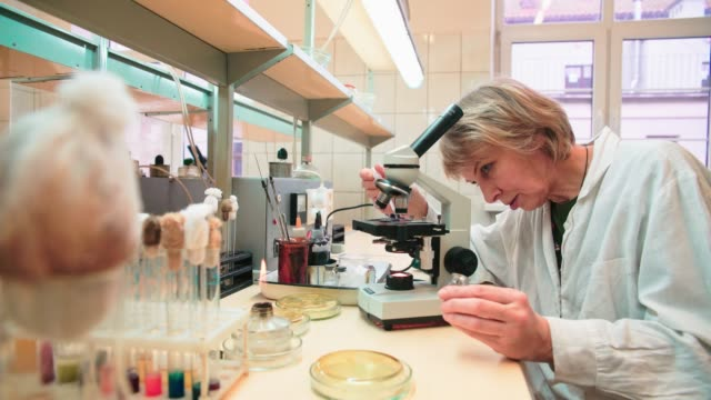 vídeos de stock e filmes b-roll de the 50-years-old attractive serious woman, scientist, working with the microscope and bacterial culture in the college microbiology lab - microbiologia