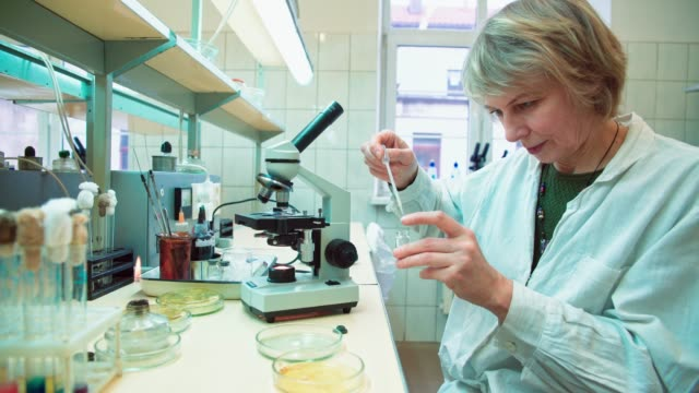 The 50-years-old attractive serious woman, scientist, working with the microscope and bacterial culture in the college microbiology lab