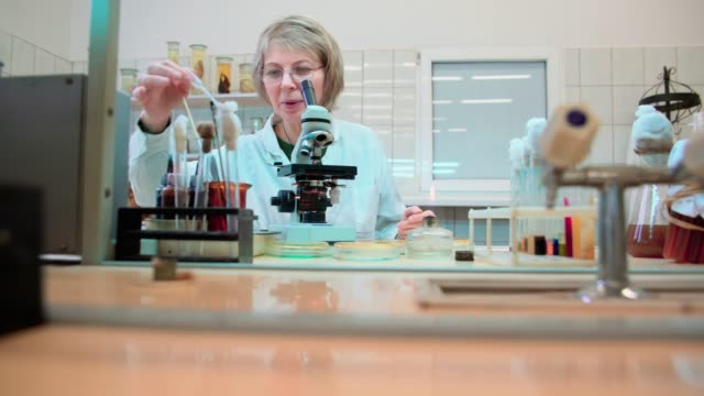 the 50-years-old attractive serious woman, scientist, working with the microscope and bacterial culture in the college microbiology lab - centro di ricerca video stock e b–roll